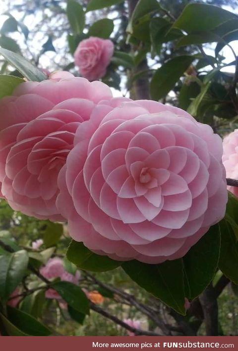 Japanese Flower Phi !!