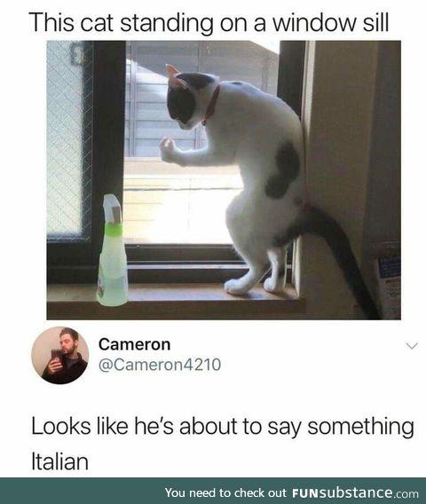 Hehe catto