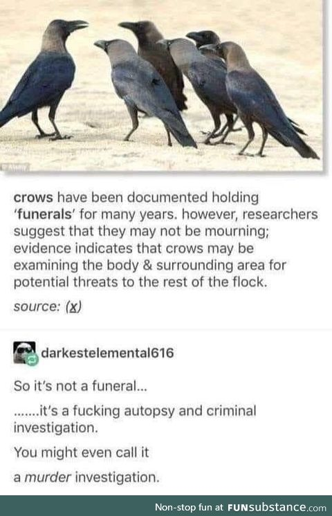 Caw and Order