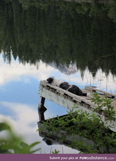 Blind dog enjoying the sounds of a lake