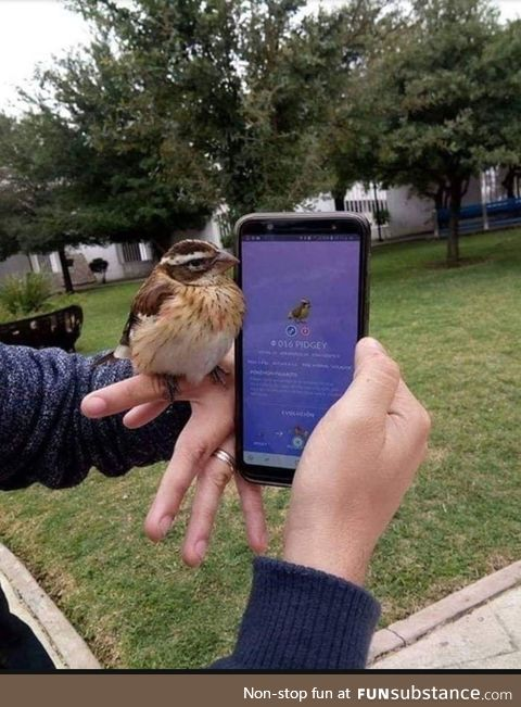 Finding a real pidgey
