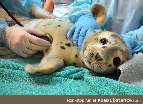Seal getting a checkup