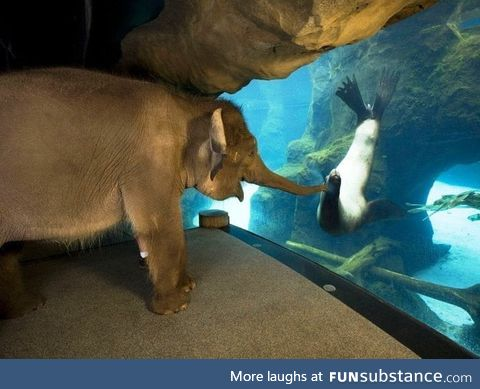 The animal handlers at the Oregon Zoo took Chendra the elephant around to meet some other