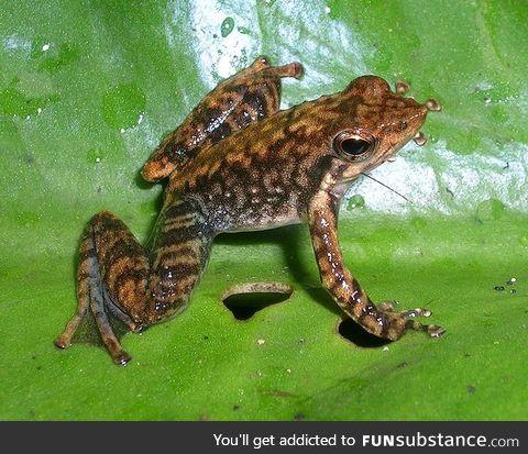 Froggo Fren #10 - Small Torrent Frog