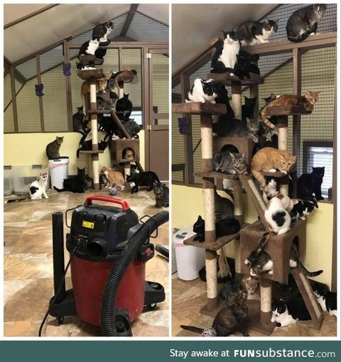 Vacuum day at the animal shelter