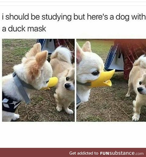 Danger duck would bite you