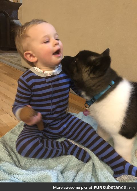 When my puppy first met my 2 yr old bro