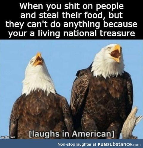 *Freedom*