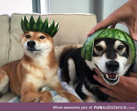 Helmet Dog #5