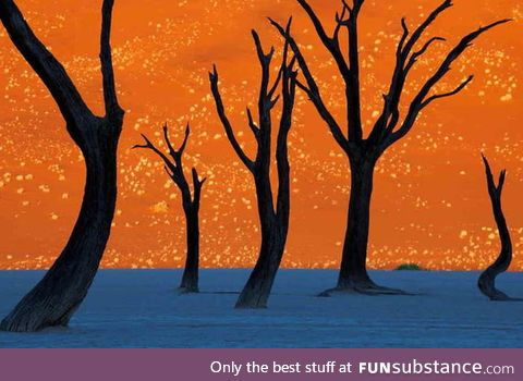 This isn't a painting, instead its a photo of trees in front of a sand dune at dawn