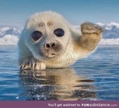 This pup just wants to say hi