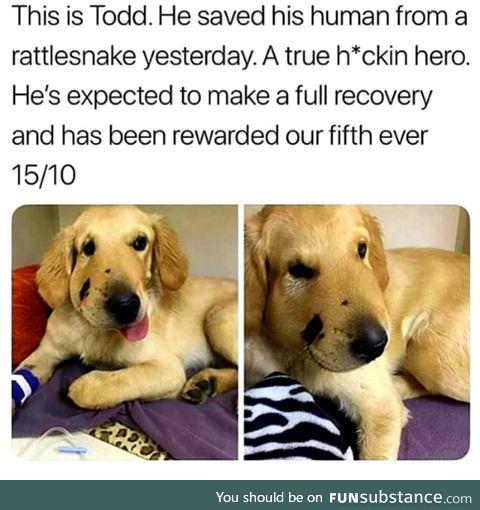 Get well soon, Todd