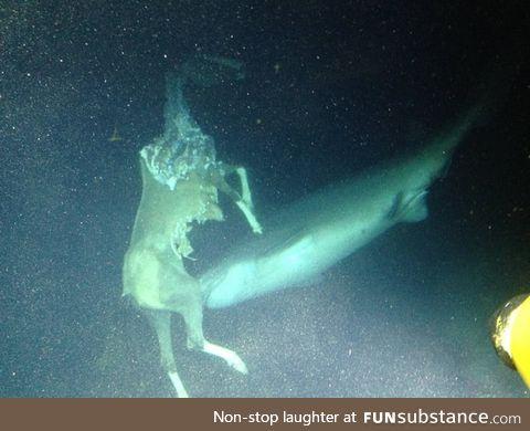 A horse getting eaten underwater