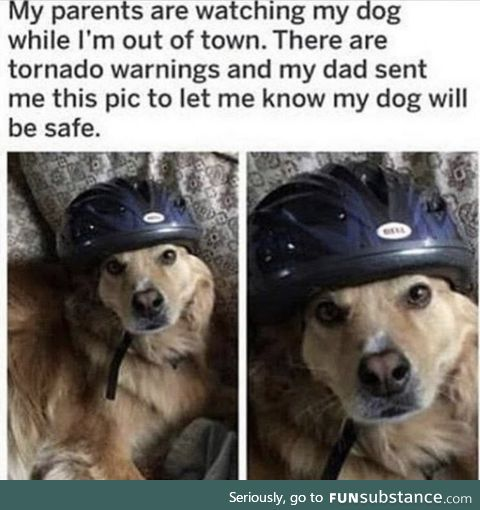 Safety first, bork later