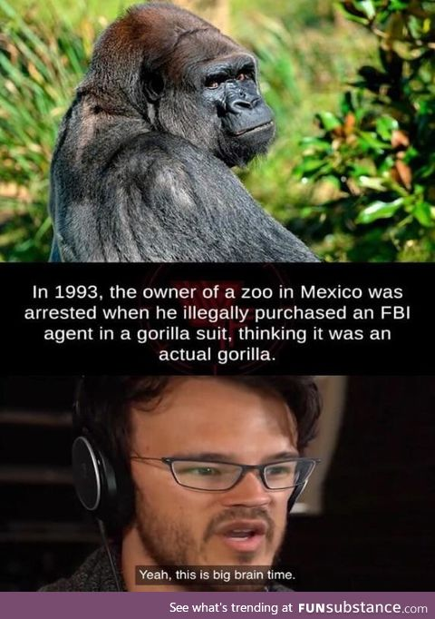 Save the gorilla's*