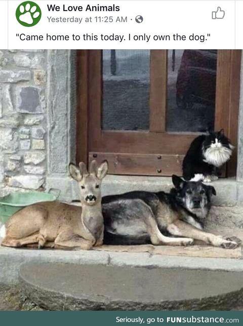 Just a few friends having a cuddle sesh