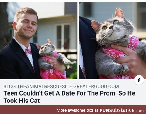 Find someone who looks at you like that cat looks at him