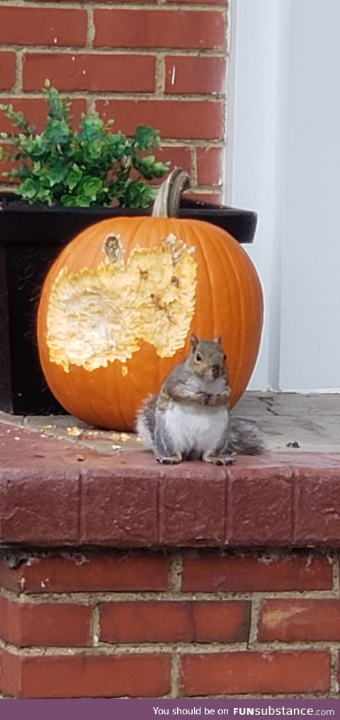 So much for my cute pumpkin!