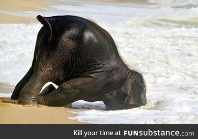 "Baby Elephant having a ""Run to the Beach, Dunk your face in the Ocean"" kind of day"