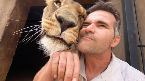 The Lion Whisper - Reuniting with his animals after 2 weeks away. (FeelGoodSubstance)