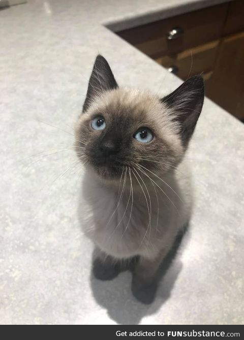 According to her owner, Toast the kitten was a very good girl at her very first vet