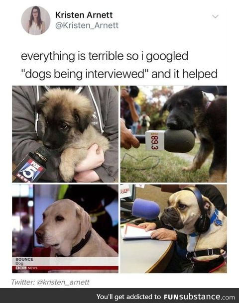Dogs interview