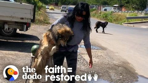 Woman spends days saving two street dogs in Romania