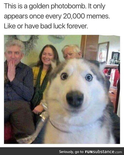 Lick or luck forever