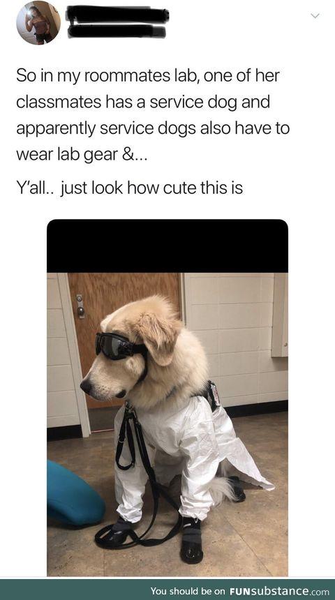 Professor doggo