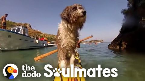 Nirvana: Kayaking around the world with a stray dog