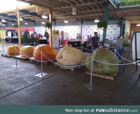 The largest four pumpkins at the Ohio State Fair