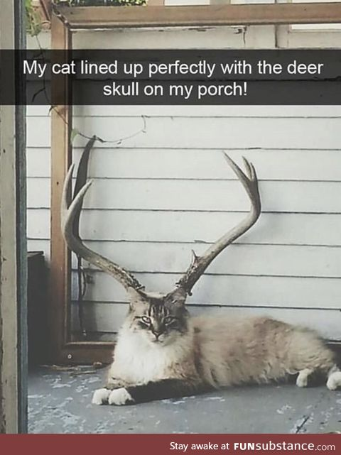 Ignore the caption.. But why does this cat look ***ing ginormous!