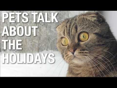 Pets on the holidays