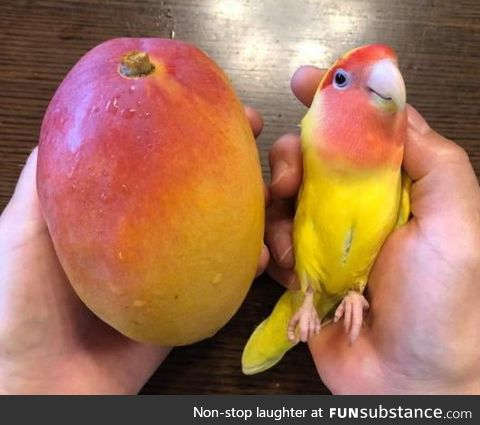 The colors on these 2 Mangoes
