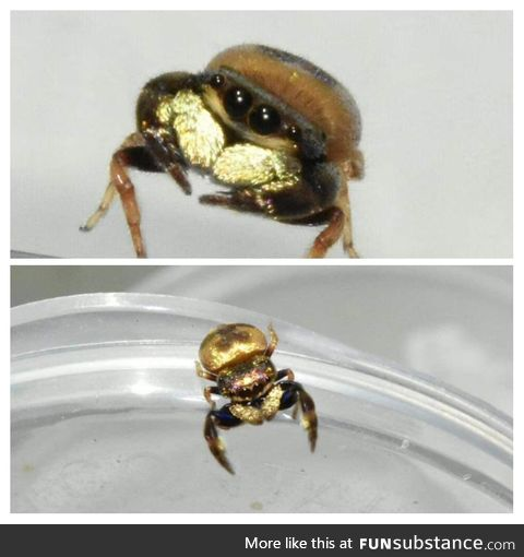 Spider haters! Look at this rich boi! He's so cute and shiny!
