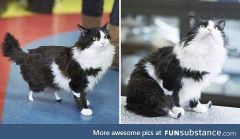 This little kitty got new kick sticks!