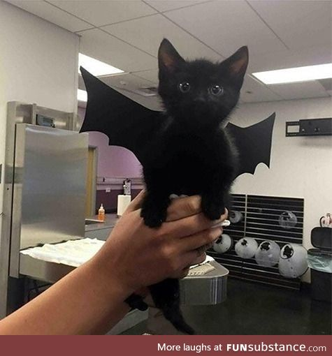 I'm Batcat! Mew!