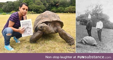 Meet Jonathon the tortoise. He's the oldest known animal in the world at present