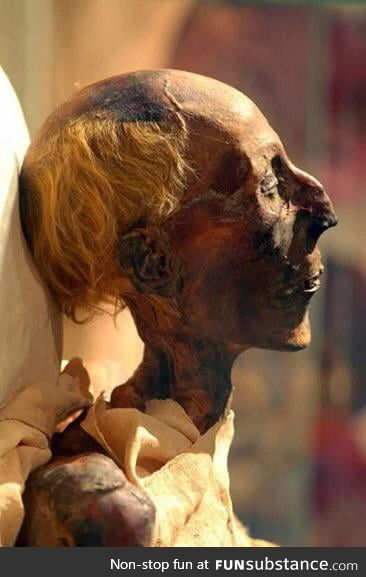 The 3300 year old Mummy of Ramses II, with his hair still intact