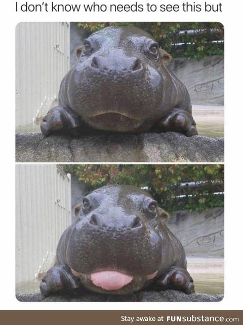 Hippo likes you