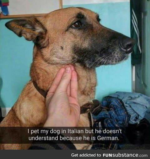 Doggo doggo doggo
