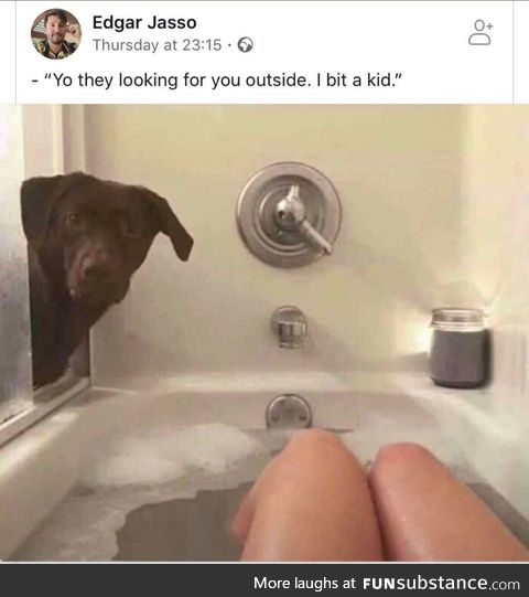 This doggo