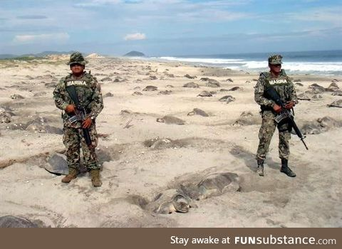 Mexican marines set to prevent the poaching of turtle eggs