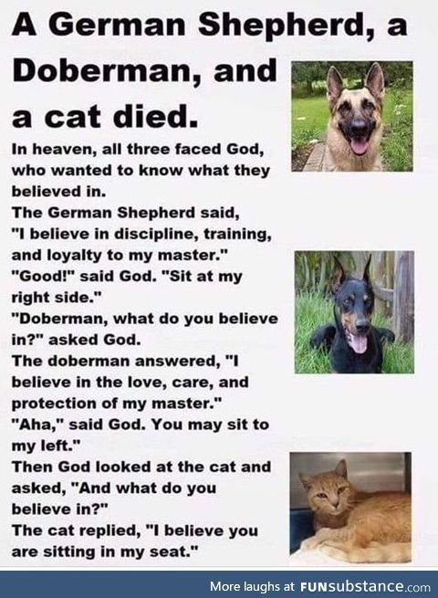 Two Dogs and a Cat go to heaven