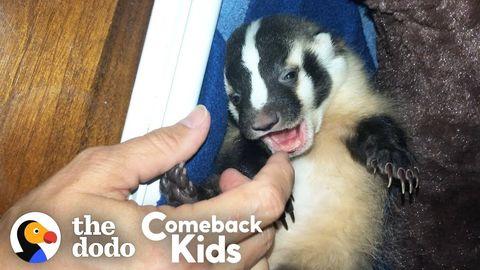 Billie the Badger (FeelGoodSubstance)