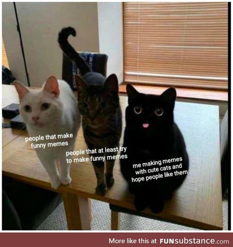 Hope you like cats
