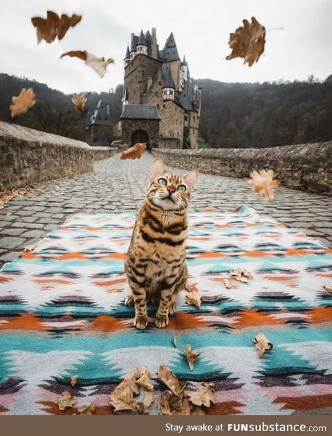 Cat in front of a castle