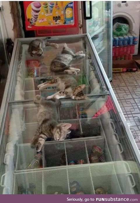 The street is very hot, so the saleswoman allows kittens to go to the store and sleep on