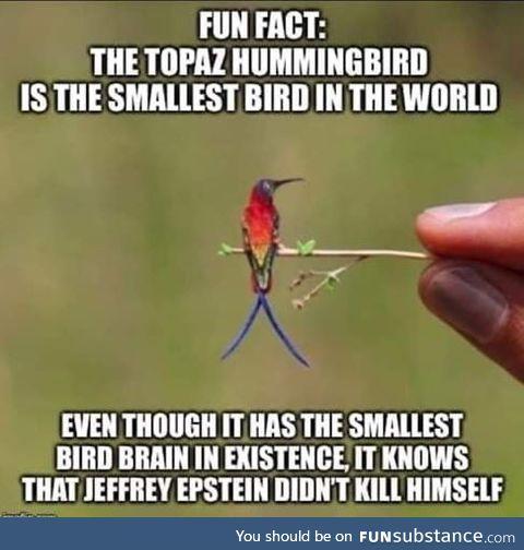 Hummingbird knowledge