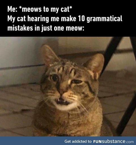 The feline is not impressed